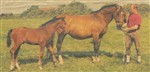 Parent mare Akki with her last foal